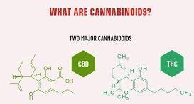 WHAT IS CANNABINOIDS